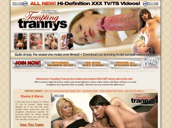Tempting Trannys Ad